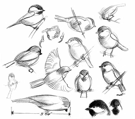 Study of a Bird with General's® Layout® Pencil by Artist Bill Tilton